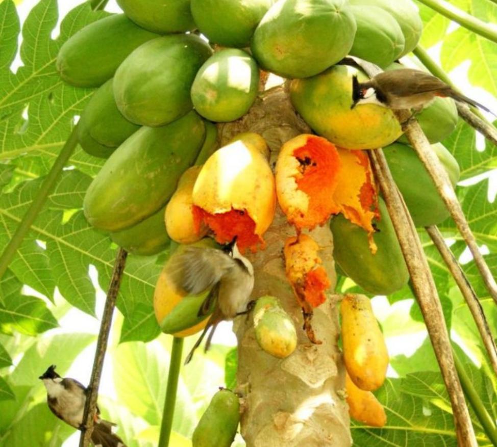 Trái cây cung cấp nhiều chất dinh dưỡng