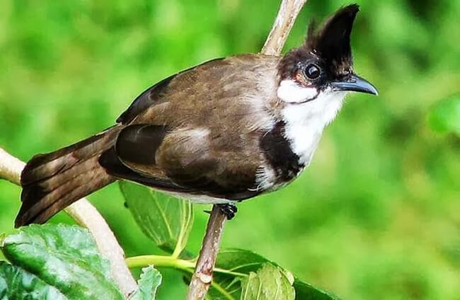 Côn trùng là thức ăn yêu thích của nhiều loài chim