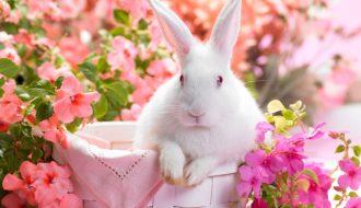 6 căn bệnh thường gặp ở Thỏ, chăm sóc thế nào để phòng ngừa?
