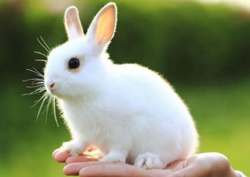Thỏ cần được mài răng thường xuyên phòng ngừa răng Thỏ quá dài