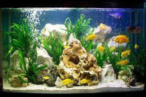 nuôi cá cảnh trong bể