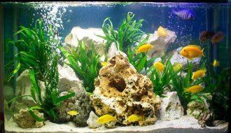 6 yếu tố giúp bạn nuôi cá cảnh trong bể không bị chết