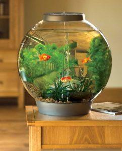 nuôi cá trong bình thủy sinh
