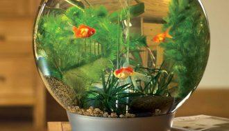 8 điều bắt buộc phải nhớ khi nuôi cá trong bình thủy sinh
