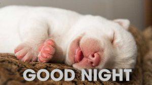 Cách để chó con ngủ ngon