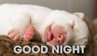 Bật mí cách để chó con ngủ ngon từ đêm tới sáng