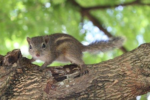 Sóc thích leo trèo trên cây