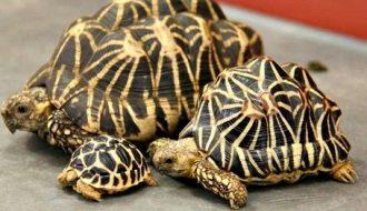 Bí quyết chăm sóc rùa cảnh từ A đến Z