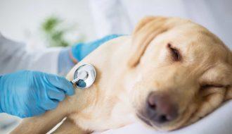 Các bác sỹ thú y chia sẻ cách chữa bệnh chó đi ngoài tại nhà