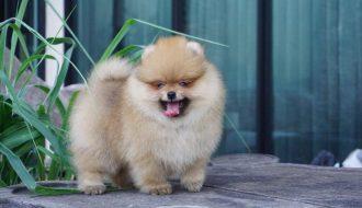Các chuyên gia chia sẻ cách kích thích mọc lông chó