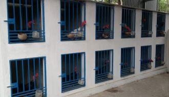 Cách thiết kế chuồng trại cho gà chọi chuẩn không cần chỉnh