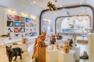 Cafe chăm sóc thú cưng - mô hình kinh doanh ăn khách nhất cho giới trẻ