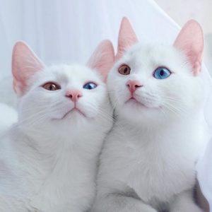 Cafe cứu hộ mèo - ngôi nhà tình thương cho những chú mèo lạc