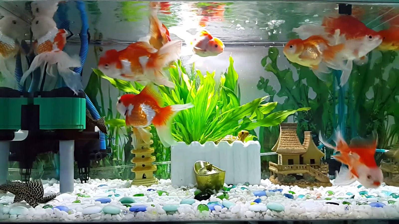 Chất lượng nước trong bể cá là một trong những yếu tố quan trọng nhất