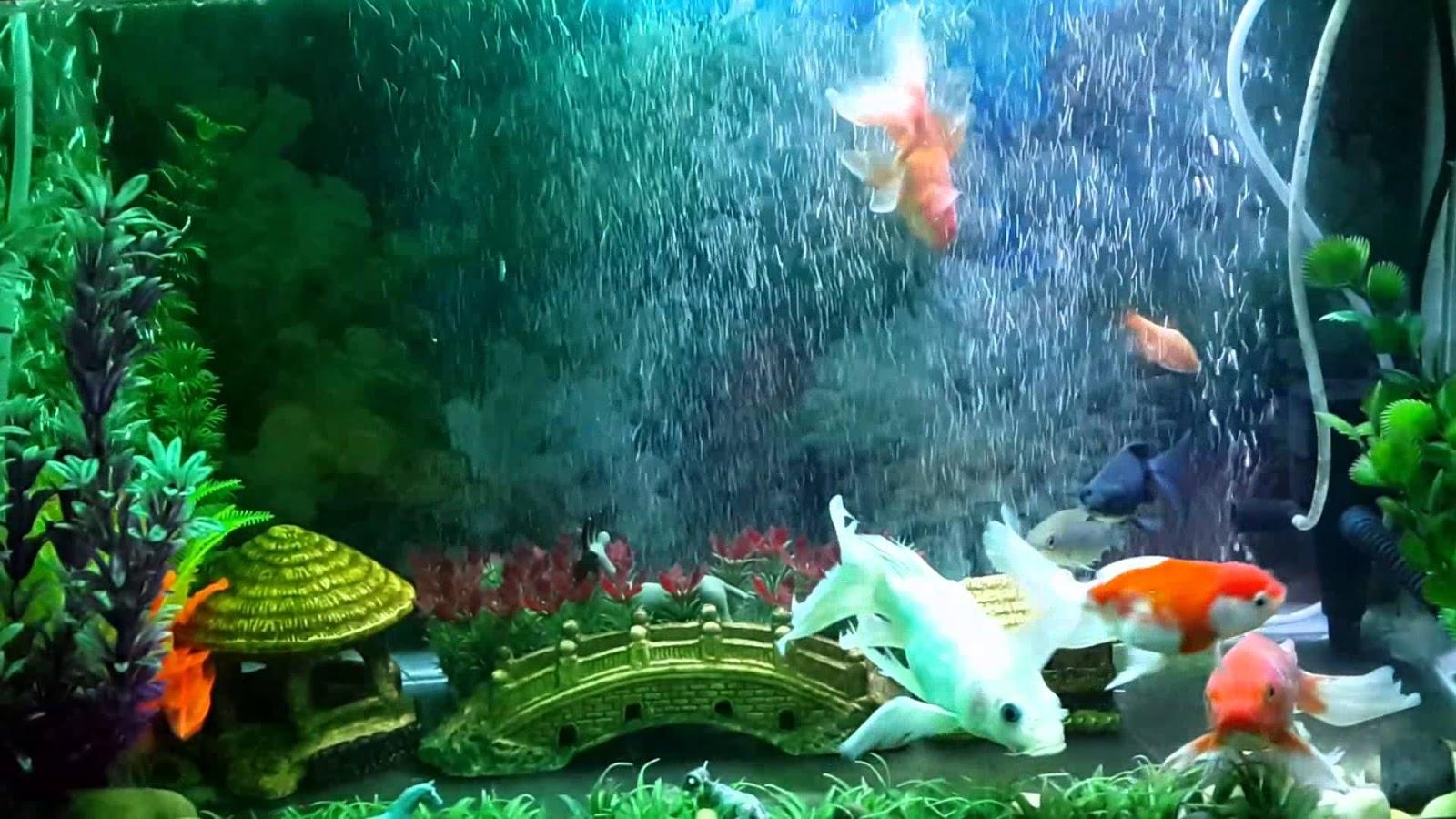 Chia sẻ bí quyết nuôi và chăm sóc cá cảnh tốt nhất