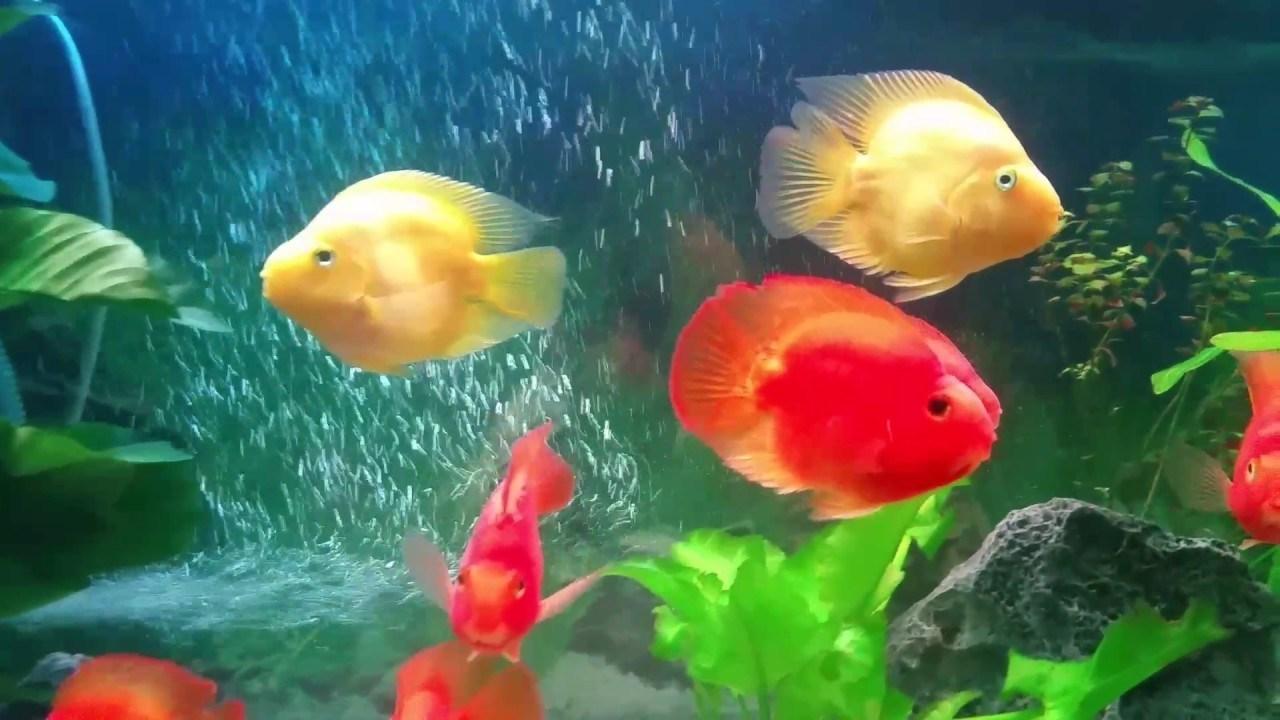 cần phải chọn bể cá phù hợp