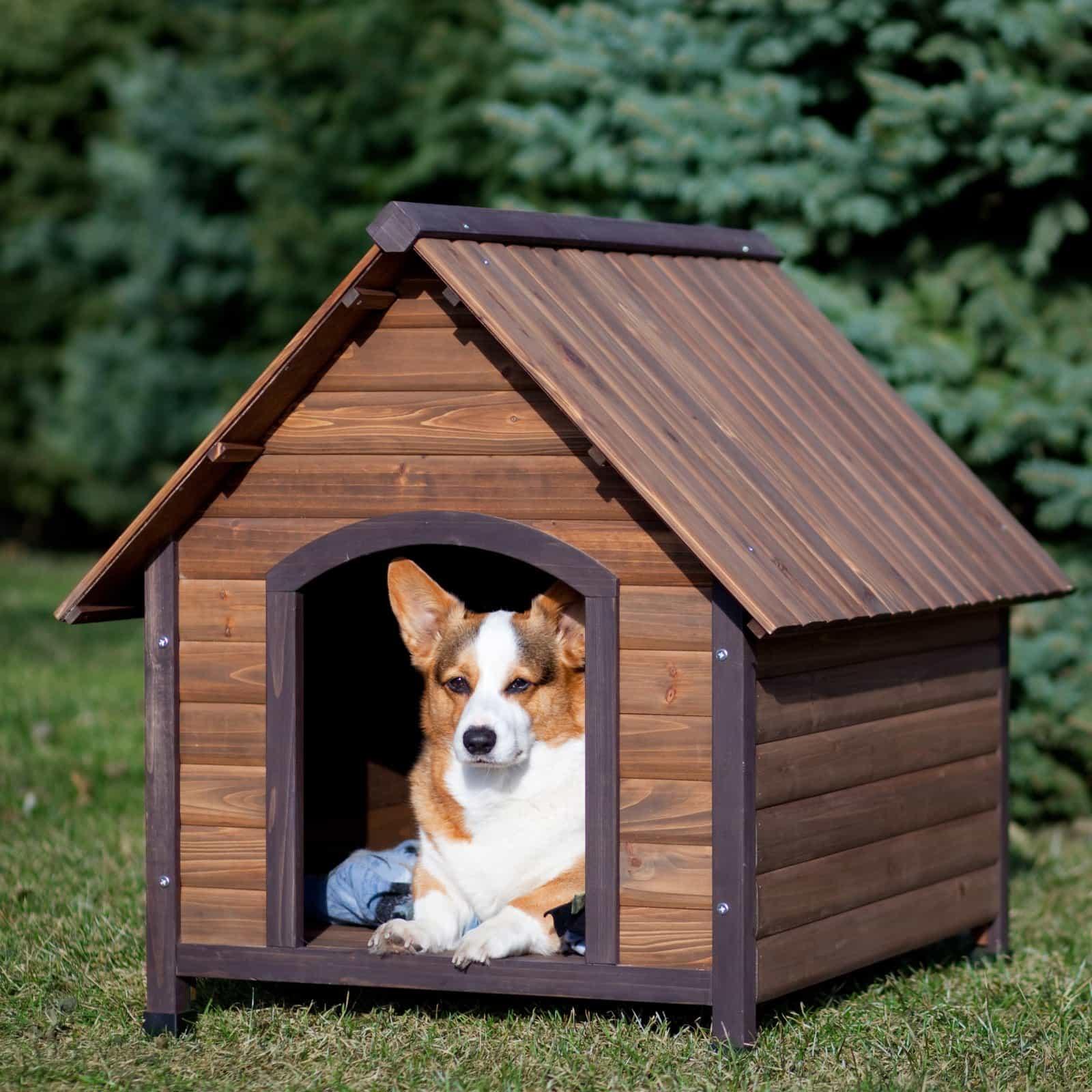 Nên chuẩn bị chỗ ở phù hợp với từng giống chó