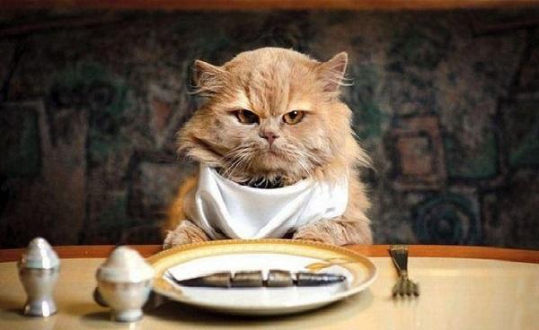 Cuối cùng mèo con có ăn cơm hay không?