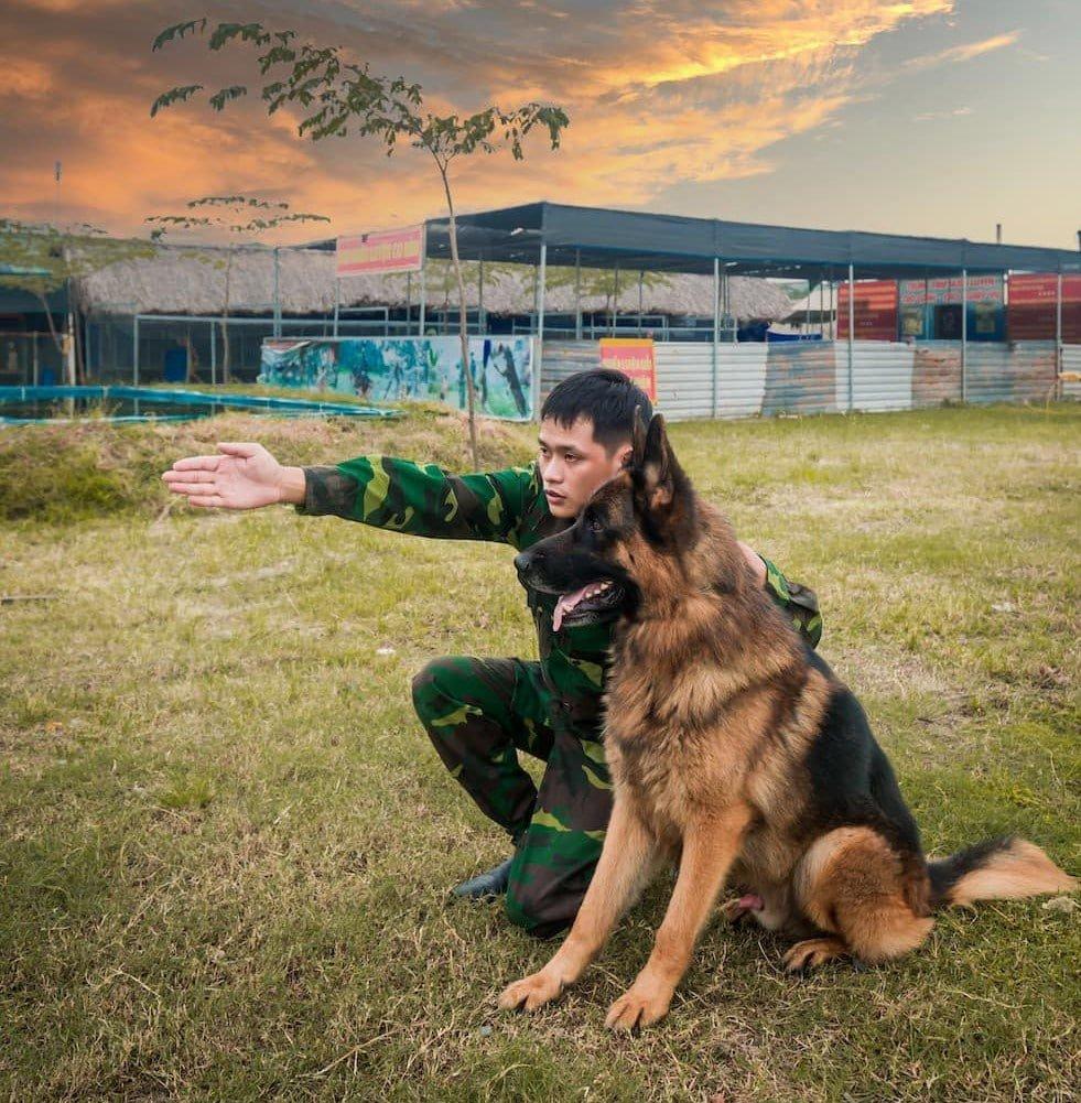 Tính cách của giống chó Becgie Đức thuần chủng rất thân thiện và tình cảm