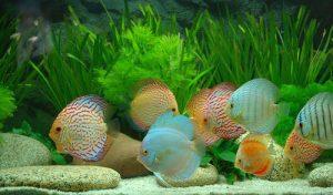 điều chỉnh độ pH nuôi cá cảnh