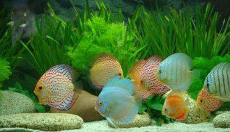 Gợi ý 3 cách điều chỉnh độ pH nuôi cá cảnh phát triển tốt