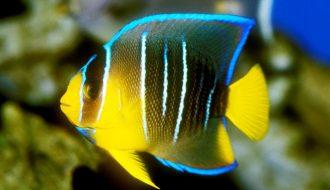 Hướng dẫn cách chăm sóc và cho cá cảnh biển ăn