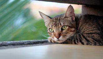 Hướng dẫn cách chăm sóc và diệt rận mèo trong nhà đơn giản, hiệu quả