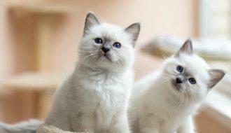 Hướng dẫn cách chăm sóc và nuôi mèo ở chung cư từ a đến z