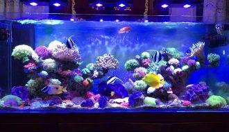 Hướng dẫn cách nuôi cá cảnh biển phát triển tốt