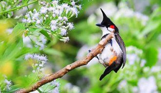 Chia sẻ kinh nghiệm tắm cho chim chào mào đúng cách