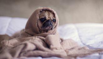 Làm sao để chữa bệnh trầm cảm cho chó cưng của bạn?