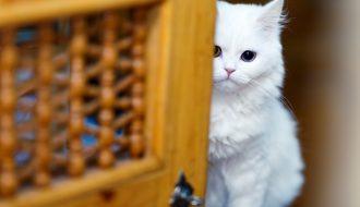 Làm sao để chữa bệnh hô hấp cho mèo thật hiệu quả?