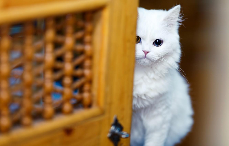 Chữa bệnh stress cho mèo