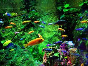 Mô hình nuôi cá cảnh - từ ý tưởng đến hiện thực là cả 1 hành trình dài