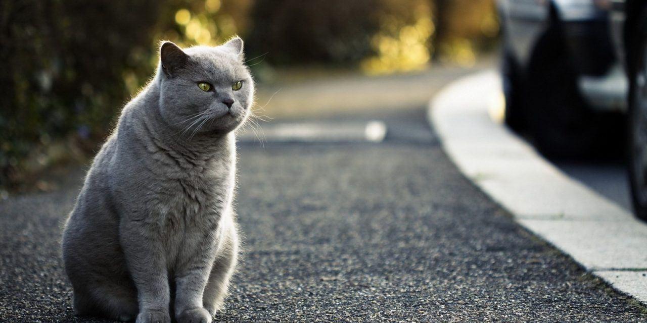 Những bệnh thường gặp ở mèo