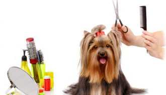 Những điều cần biết về cạo lông chó bằng tông đơ