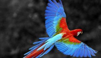 Những loài chim cảnh đẹp và dễ nuôi nhất ở Việt Nam