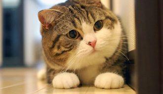 Những sai lầm cần tránh khi bạn đang nuôi mèo cảnh