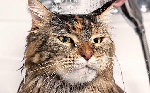 Lâu nay nhiều người vẫn cho rằng nuôi mèo khá dễ, không cần đầu tư quá thời và công sức