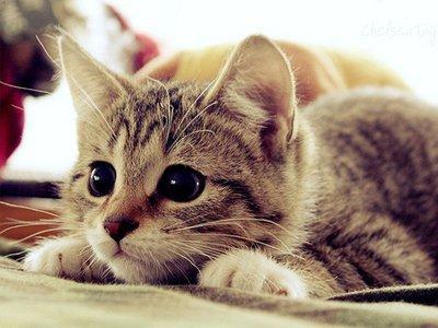 Cách nuôi mèo cái khi đẻ