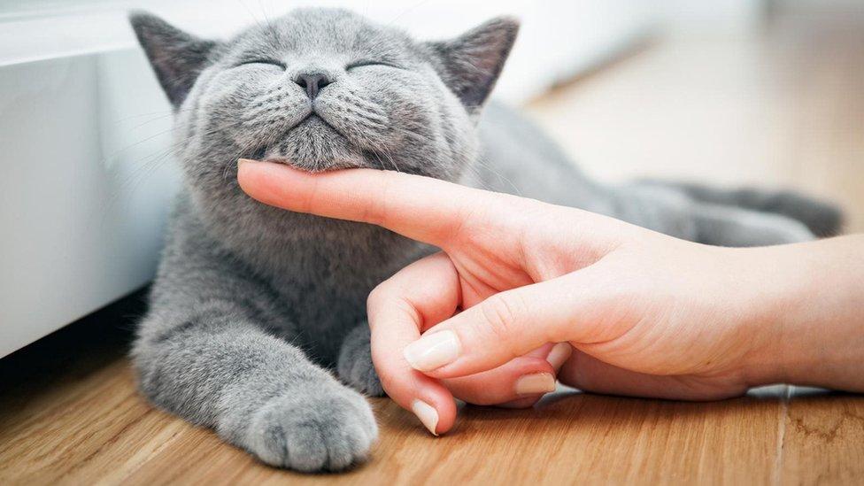 Nuôi mèo theo trào lưu mà không tìm hiểu cặn kẽ