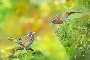 Chàng trai Thái Bình nuôi chim cảnh thu về nửa tỷ đồng mỗi năm