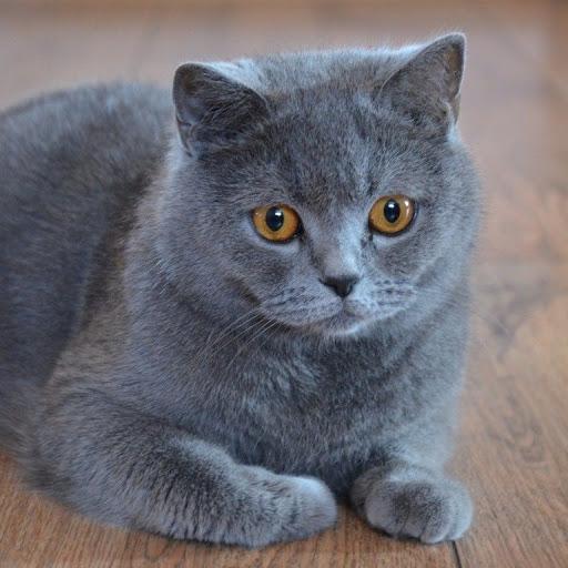 Chuồng quây dành cho mèo ALN.