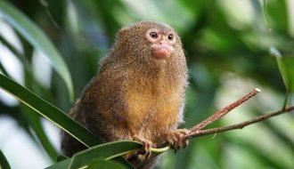 Tất tần tật về cách chăm sóc Khỉ Đuôi Sóc