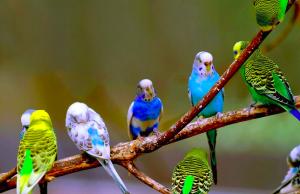 Tổng quan về Vẹt