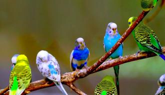 Tìm hiểu về loài chim biết nói tiếng người - Vẹt