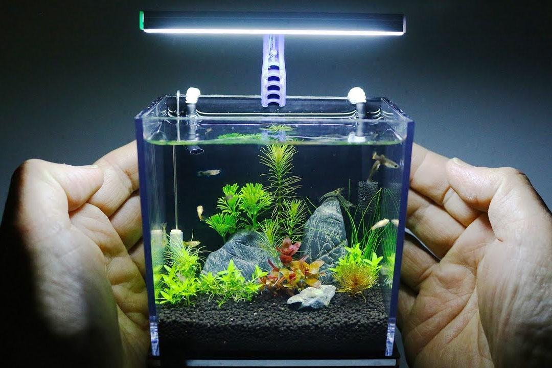 nuôi cá cảnh không cần oxi