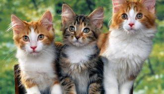 Xây dựng mô hình kinh doanh mèo cảnh thành công như nào?